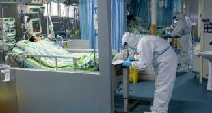 появление коронавируса в лаборатории